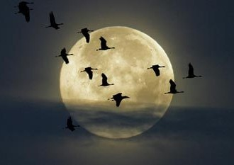 Full-Moon-with-Cranes-Flyin